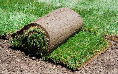 Green Keeping C (Turf Repair & Renovation) Online Course