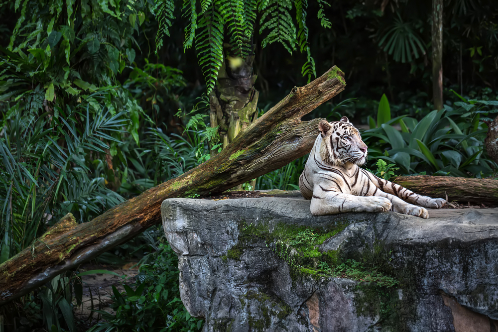 Online Zookeeping & Wildlife Courses | Captive & Wild ...