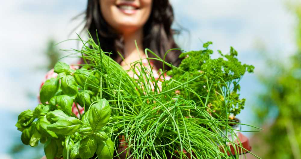Find out why Introduction to Herbs is our Horticulture Tutor's Favourite Course.
