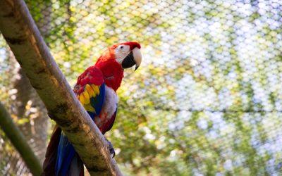 Aviculture Birds Online.