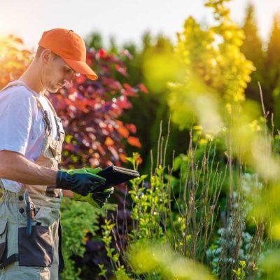 Outdoor plant production - market gardening.