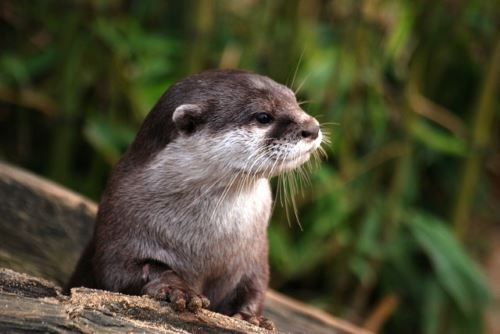 Otters are carnivores too!