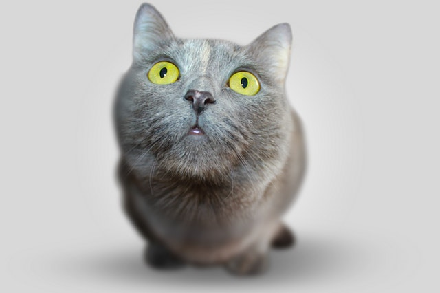 Cat Psychology & Training – Cats are not small dogs!