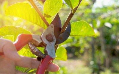 Pruning Course Online