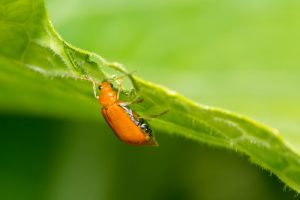 Plant Pests Course Online