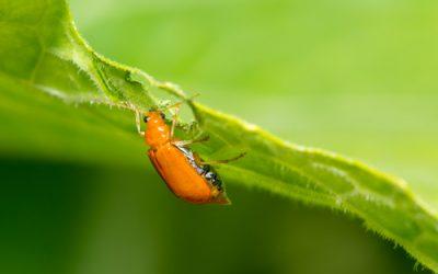 Plant Pests Course Online