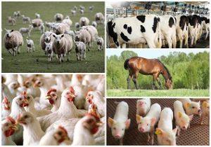 Animal Courses