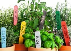 Herbs Courses