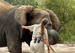 Zoo Keeping & Wildlife Courses
