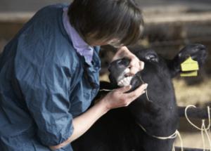 Animal Husbandry Courses