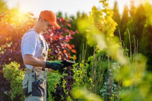 Horticulture & Gardening Courses Online