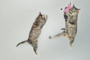 Cat psychology course