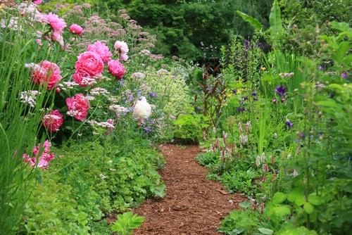 cottage garden path.